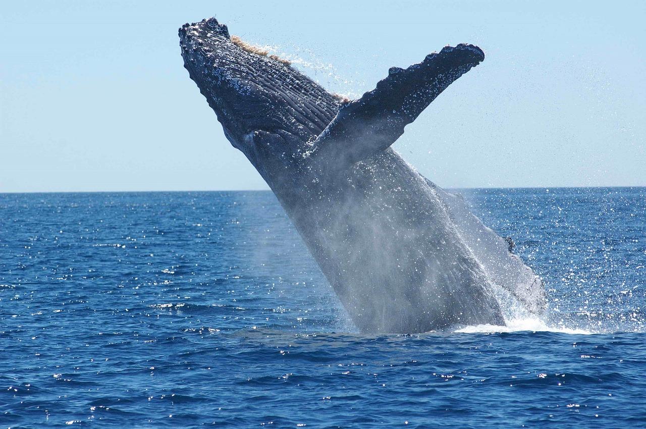 クジラ女子は潮を出し切ってからがオーガズムの始まり!潮吹き=イクではない!