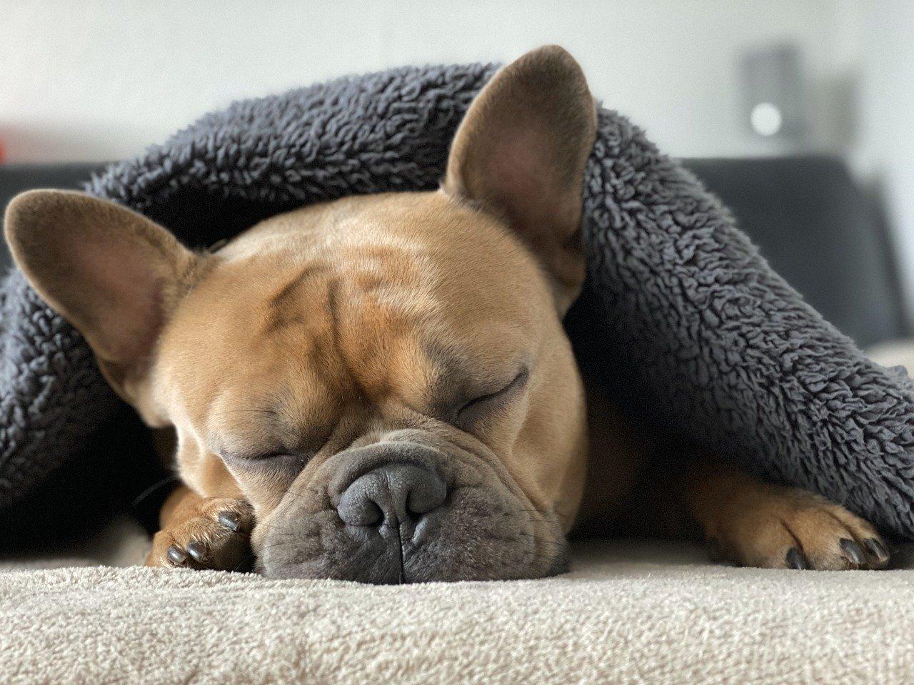 彼氏がずっと寝ていて退屈!寝すぎな彼氏を気持ちよく起こす方法
